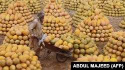 FILE: A worker pushes a wheelbarrow loaded with melons at a fruit market in the northwestern city of Peshawar on August 31.