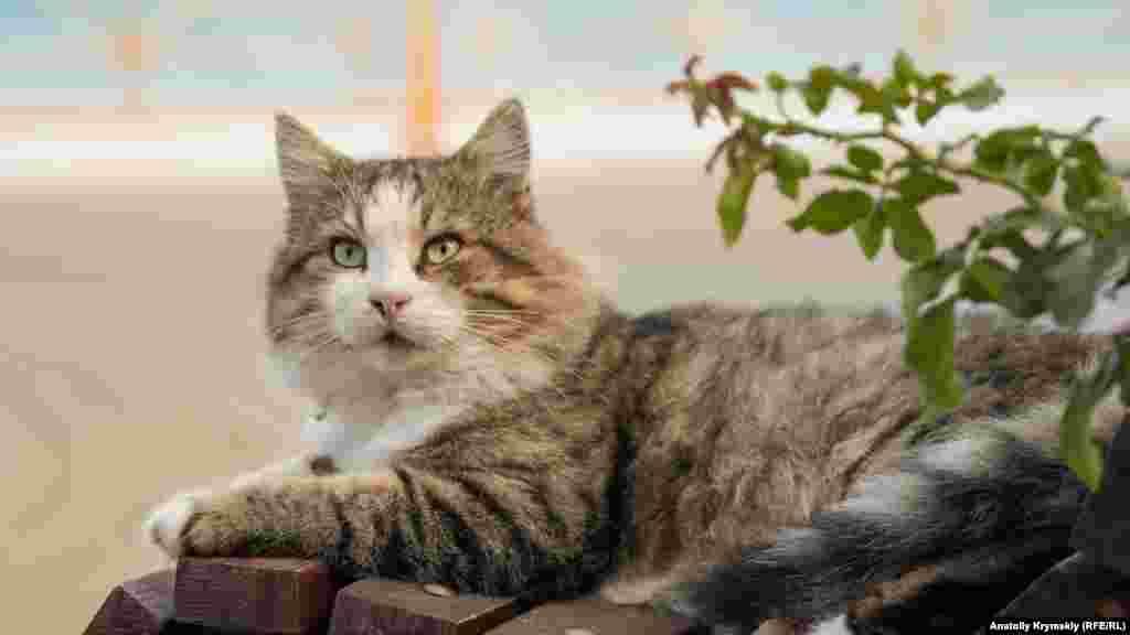 Дворовой кот со скамейки невозмутимо наблюдает за всем происходящим