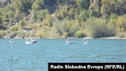 Пеликани во Преспанското Езеро