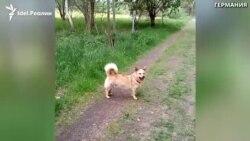 Пёс Вуки в Германии
