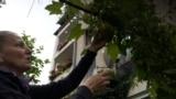 Sarajevo, Bosnia and Herzegovina, garden, urban garden, permaculture.
