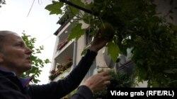 Paprike i krastavci na 50 kvadrata ispred zgrade u Sarajevu