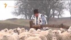 Пастух, 400 овец и 300 коз