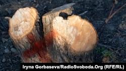 Красными метками помечают деревья, подлежащие уничтожению