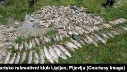 U rijekama Vezišnici i Ćehotini kod Pljevalja došlo je do pomora ogromne količine ribe, a rijeke su pretvorene u bijelu zatrovanu masu
