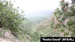 Землетрус магнітудою 6,2 був зосереджений в гірському районі поблизу Афганістану