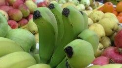 Importy azaltmaga synanyşýan Türkmenistan bananyň ilkinji hasylyny almaga taýýarlanýar