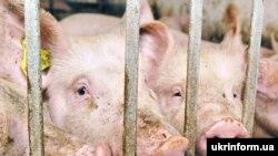 Russia has seen outbreaks of swine fever in some regions.