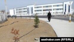 Aşgabadyň dürli künjeklerinde täze nahallar ekildi