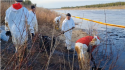 LUKoil Says It Cleaned Up Its Oil Spill. Russian Environmentalists Say The Contamination Continues.