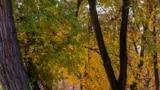 Kyrgyzstan - Autumn in Bishkek - autumn - weather - street - city - city life Oktober 2021