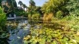 Круглий ставок з білим і рожевим лататтям, каспійським лотосом та іншими водними рослинами