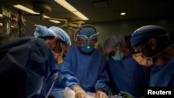 Лекари трансплантираха на човек бъбрек на прасе
