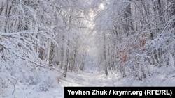 Так выглядит «снежная сказка» в лесу на Ай-Петри