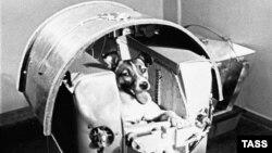 Pas Lajka pre polijetanja u svemir, 1957.