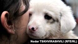 Татуировка, чип или специальная бирка на ухе собаки или кошки – выбирать, как будут идентифицировать питомцев жителей столицы в Агентстве мониторинга животных, могут сами хозяева