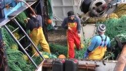 Референдум щодо ЄС. Що скажуть рибалки в Шотландії? (відео)