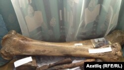 Кости мамонта в местном музее