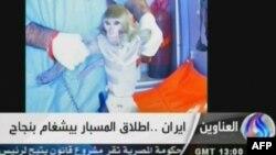 Иран впервые произвел успешный запуск космического аппарата с обезьяной на борту 28 января 2013 года