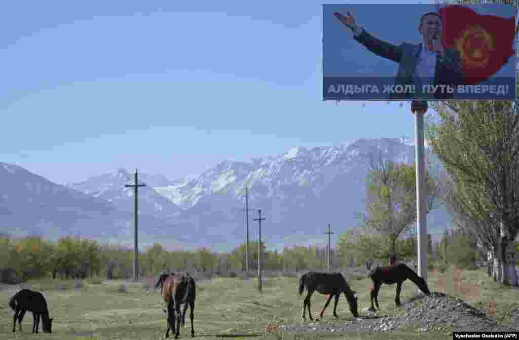 Horses graze in a field next to an election-campaign billboard for Kyrgyz opposition deputy and presidential candidate Omurbek Babanov in the village of Baytik, near the capital, Bishkek. (AFP/Vyacheslav Oseledko)
