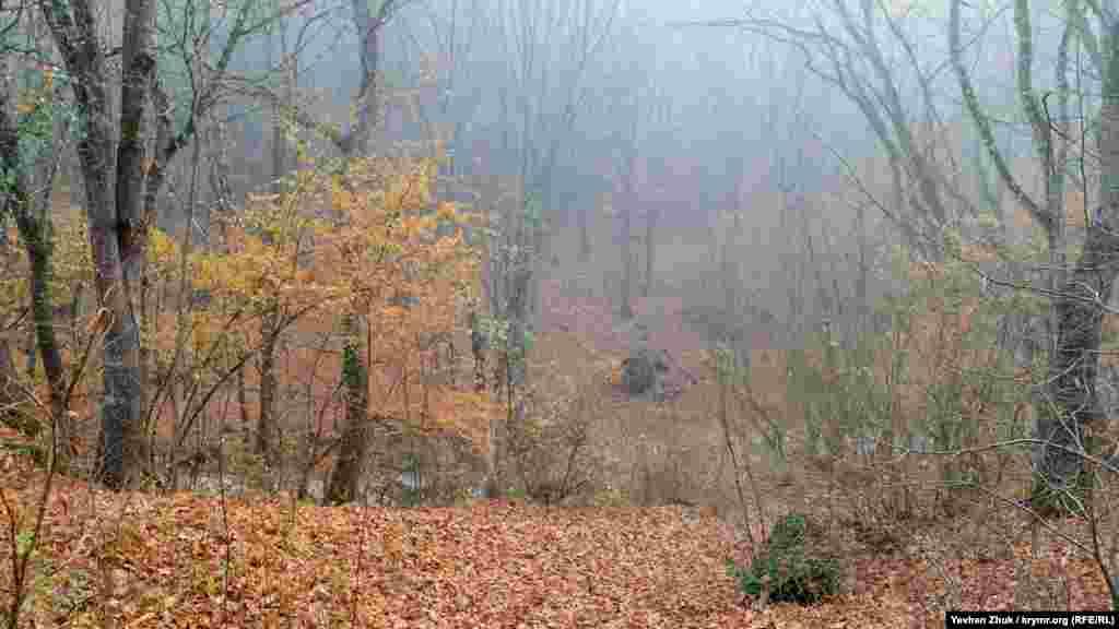 Байдарський ліс у туманному серпанку