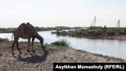 Көмекбаев ауылы іргесінен өтетін Қуаңдария өзені. Қызылорда облысы, 16 шілде 2013 жыл.