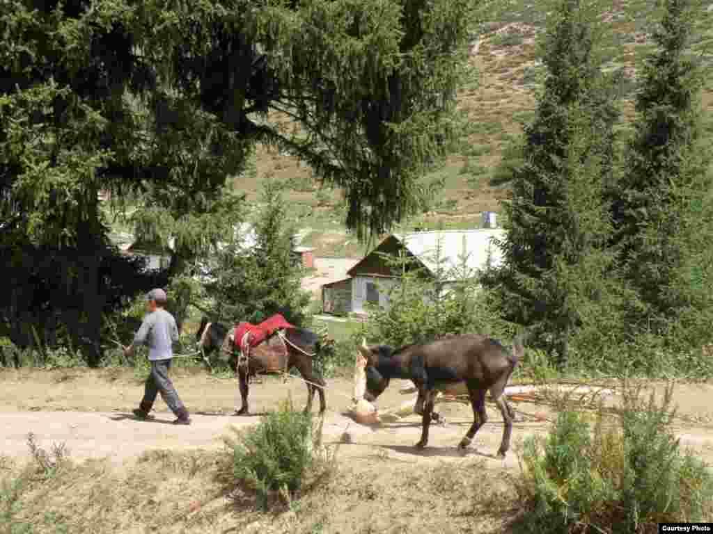 Кыргызстан. Зимняя заготовка летом