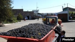 Armenia -- Farmers deliver grapes to a storage facility in the Ararat Valley.