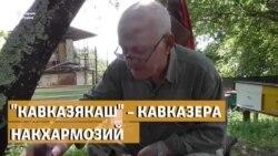 """Кавказякаш"" – Кавказера накхармозий"