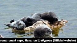 Нерпы на Байкале