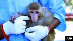 A scientist holds a live monkey ahead of the announcement via Iranian news agencies that scientists there had returned a monkey alive after it traveled in a capsule to an altitude of 120 kilometers for a suborbital flight on January 28.