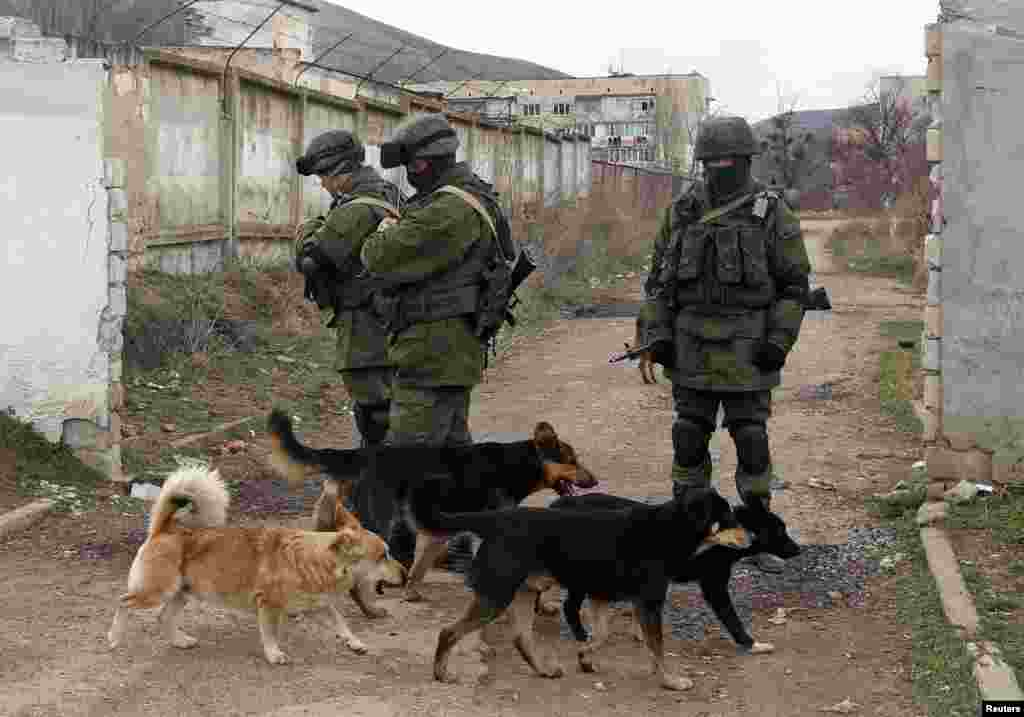 Dogs pass by uniformed men, believed to be Russian soldiers, near a Ukrainian military base in the village of Perevalnoye outside Simferopol, Crimea, in March 2014.