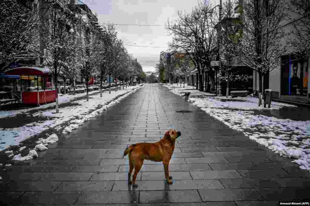 A stray dog stands on a snow-covered deserted square in Pristina, Kosovo, on April 1. (AFP/Armend Nimani)