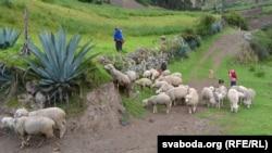 Сельская гаспадарка — асноўны занятак кечуа