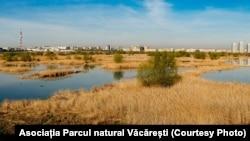 Parcul natural Văcărești, locul unde Ceaușescu voia să facă un lac adânc de 10 metri, cu o arie de 150 de hectare.