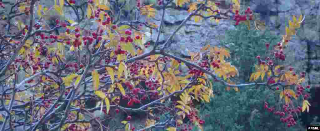 Осень в горах Иссык-Куля #13