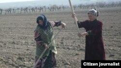 """С начала реализации третьего этапа закона о """"дальневосточном гектаре"""" подано более 15,3 тысячи заявок на получение земли"""
