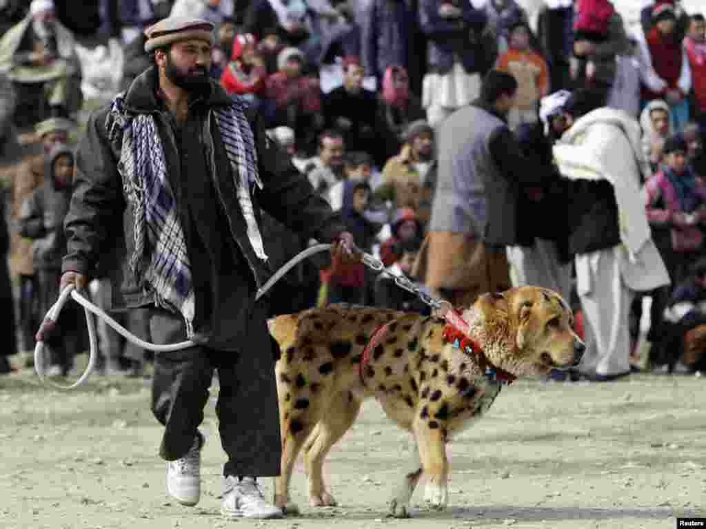An owner waits with his dog, painted with spots, before a traditional dog fighting competition in Kabul on February 18. Photo by Omar Sobhani for Reuters