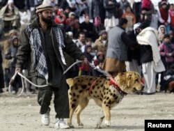 Итін таластыруға әкелген ауғандық. Кабул, 18 ақпан 2011 жыл.