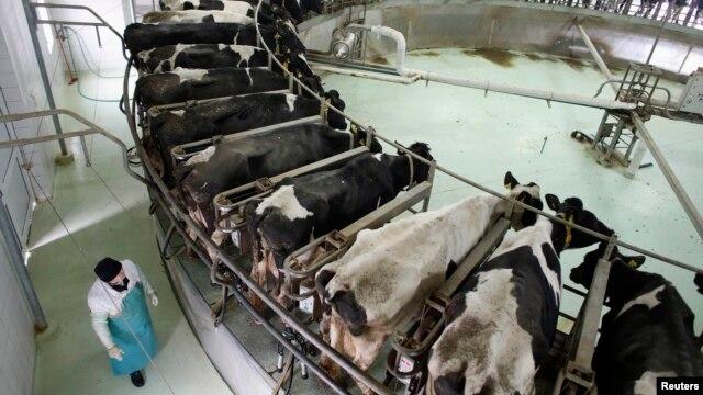 Jedna od farmi u Srbiji