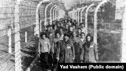 В'язні нацистського концтабору «Аушвіц-Біркенау» після визволення, 27 січня 1945 року