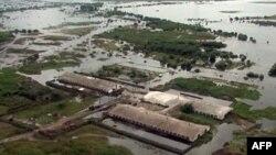 Затопленная ферма в Амурской области. 19 августа 2013 года
