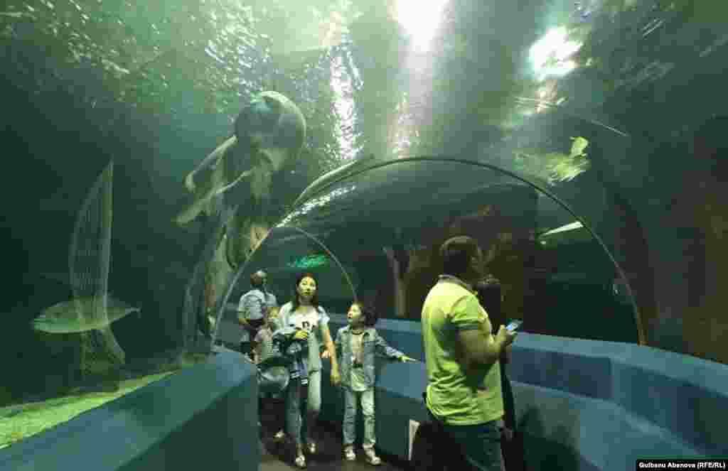 В этому году ожидается открытие еще одного павильона, где поселятся опасные морские и коралловые рыбы. В эти дни идут ремонтно-оформительские работы. Астана, июнь 2018 года.