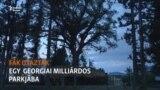 A milliárdos és az ő utazó fái