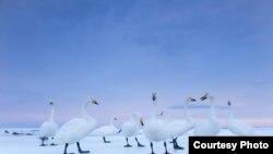 Фотография Стефано Унтертинера для National Geographic Magazine. Хоккайдо, Япония, январь 2010 года. Иллюстративное фото.