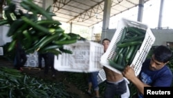 Workers throw away cucumbers to be destroyed at an agriculture facility near Bucharest, Romania, on June 6.