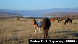 У дороги пасутся кони, жеребенок не отходит от лошади, у которой грива заплетена в косичку