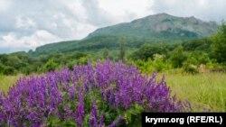 Прерванный поход на Чатыр-Даг: туристическими тропами Крыма (фотогалерея)