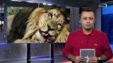 ناو آمریکا آمد؛ شیر ایرانی به خانه بازگشت