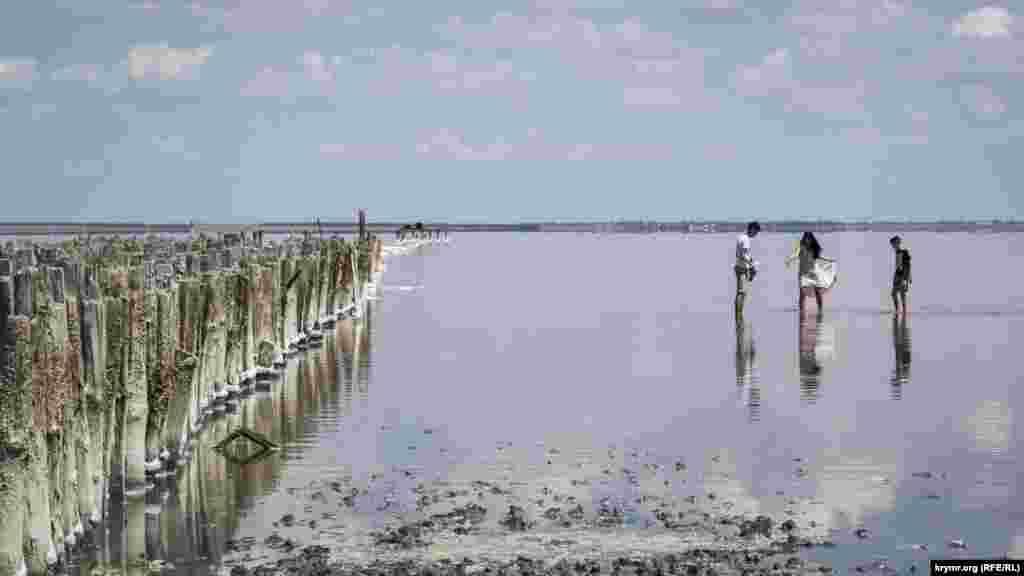 Характерный розовый цвет озера Сасык-Сиваш связан с жизнедеятельностью одноклеточных водорослей и других микроорганизмов
